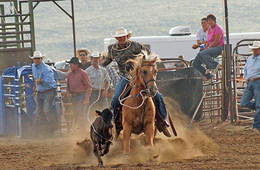 Tie Down Calf Roping